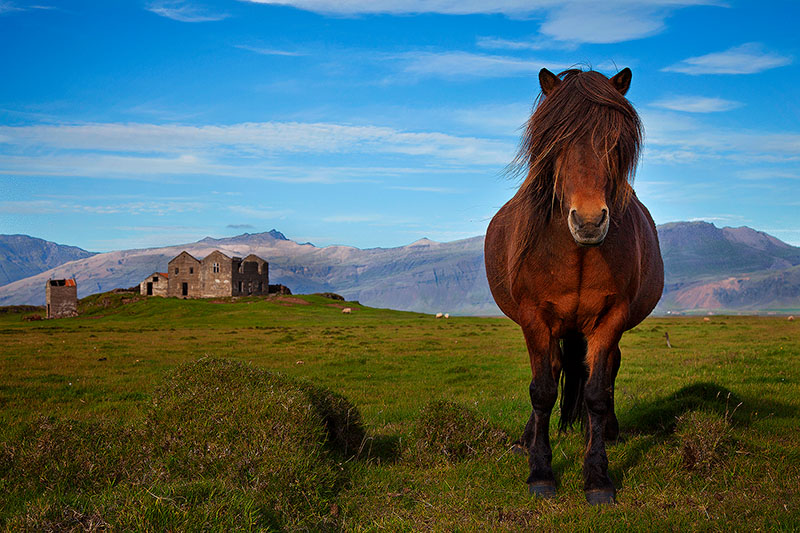 <p>Beautiful horse standing still in a field with a castle in the background</p>